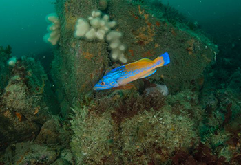 Discover Cornish diving